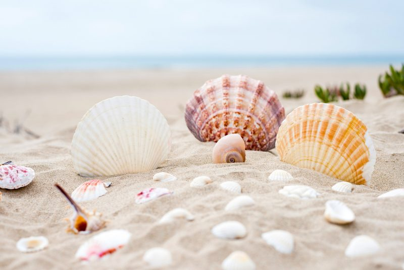 砂浜に貝殻がたくさん落ちている画像