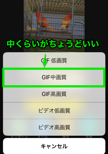 GIF動画 画質選択画面